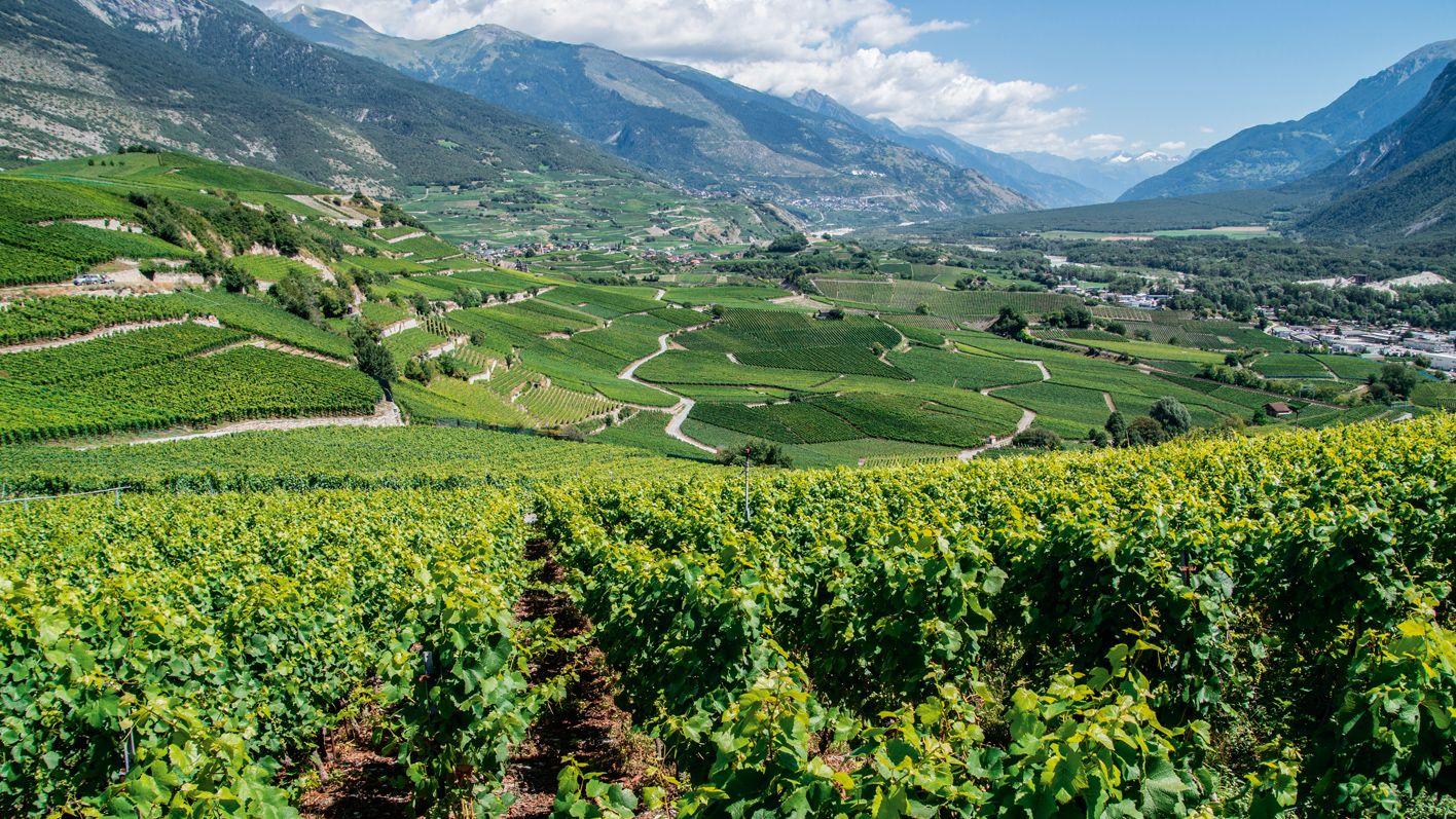 Die schönsten Rebberg-Touren der Schweiz